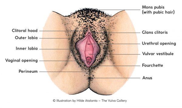 Vulva oder Vagina? It matters. - Viva La Vulva